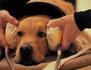 Le chien : enquête sur un animal familier