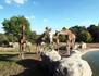 Les mystères du Zoo de Beauval