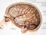 Les énigmes du cerveau