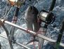 Pêche à haut risque : bataille dans l'Atlantique