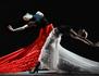 Flamenco Hoy de Carlos Saura