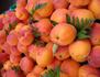 Les abricots d'Anatolie