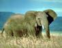 Chroniques de l'Afrique sauvage
