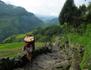 Kamlahari, l'enfance volée du Népal