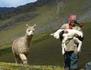 Pérou, un alpaga pour Christobal