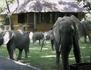 Des éléphants à l'hôtel