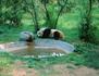 La vallée des pandas