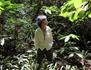 Marina Chapman - Une enfance avec les singes