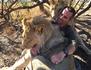 Devenir lion