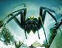 Ice Spiders : araignées mutantes