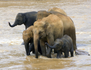 La gardienne des éléphants