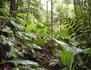 Au royaume des plantes