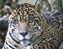 Les grands animaux d'Amérique du Sud