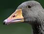 Les routes secrètes des oiseaux migrateurs